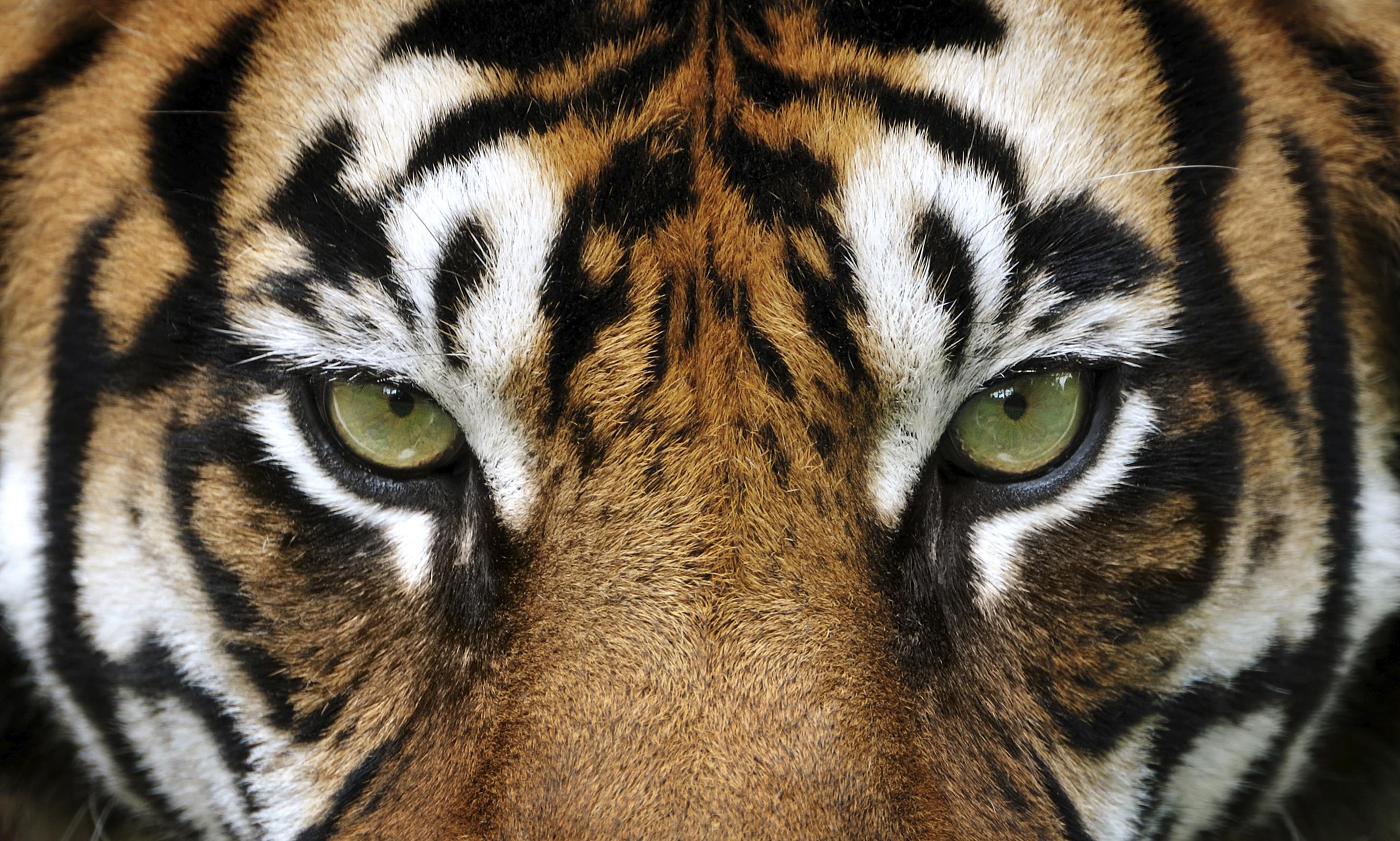 l il du tigre observer l 39 activit de sa boutique avec. Black Bedroom Furniture Sets. Home Design Ideas